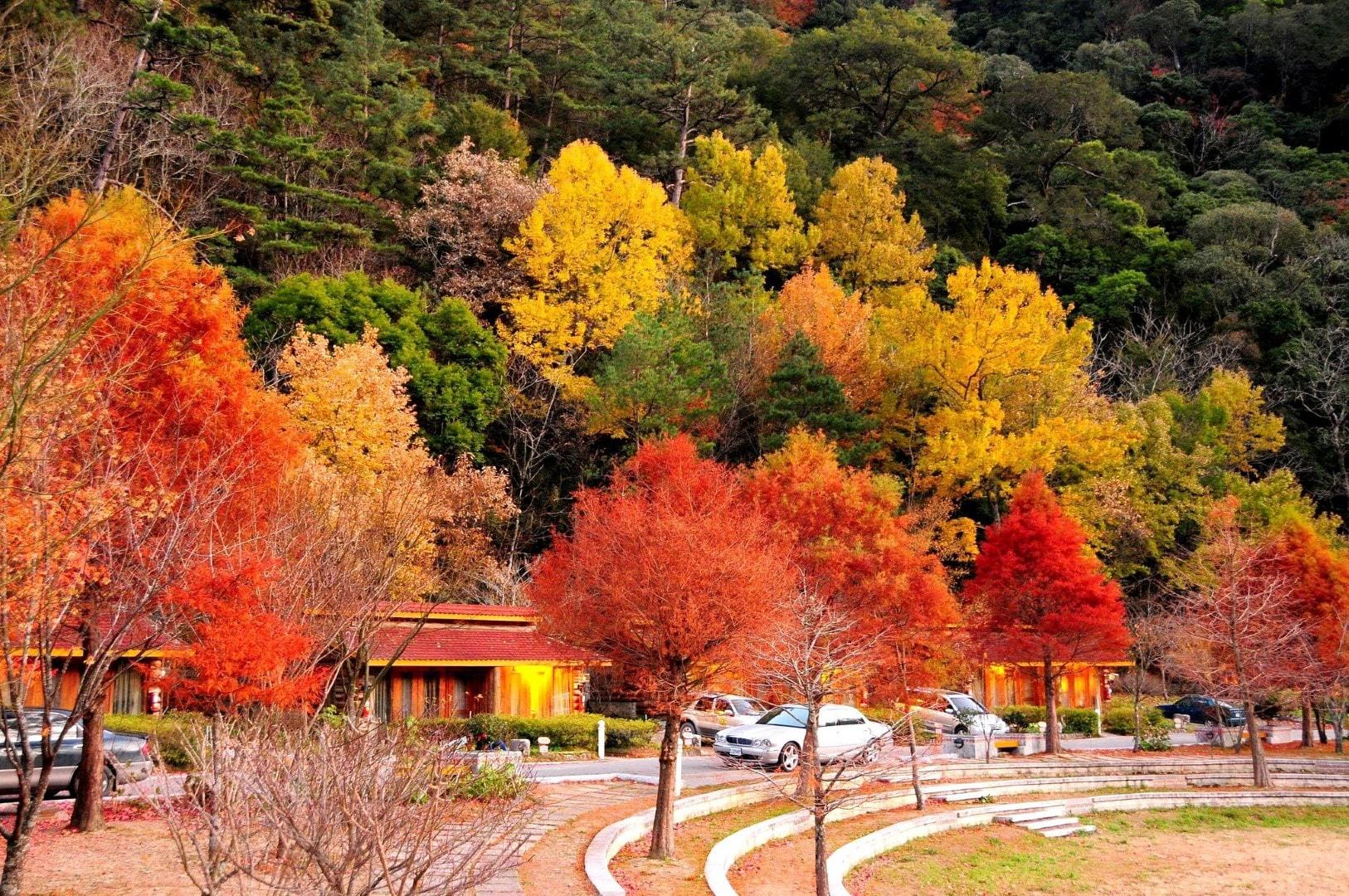 Cảnh sắc tuyệt đẹp của mùa Thu.