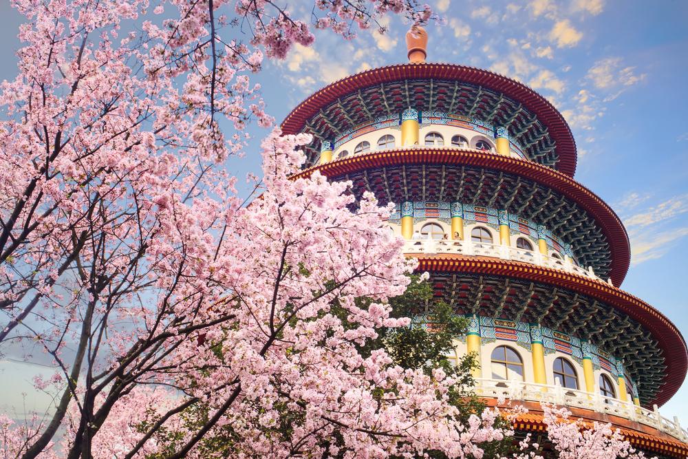 Du lịch Đài Loan tự túc ngắm hoa anh đào.